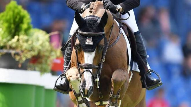 Das Pferd Firkov Du Rouet beim CHIO Aachen im Jahr 2019
