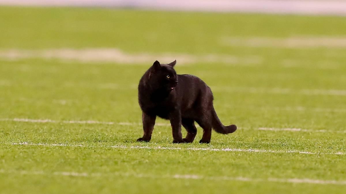 Beim College-Football-Spiel der Miami Hurricanes kam es zu einem Katzen-Vorfall