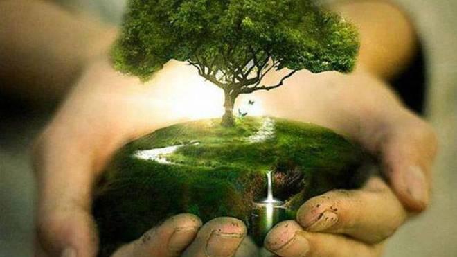 Auf den Phillipinen ist jeder Schüler gesetzlich verpflichtet 10 Bäume zu pflanzen