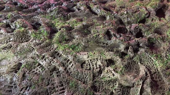 So sah der Rasen in Lotte aus