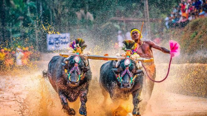 Srinivas Gowda erlangt mit seinen sportlichen Höchstleistungen Berühmtheit
