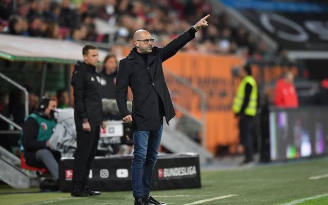 Bayer Leverkusen: Trainer Peter Bosz will sich auf eigenes Spiel konzentrieren , Leverkusens Trainer Peter Bosz liefert sich mit Mönchengladbach ein Fernduell um die CL