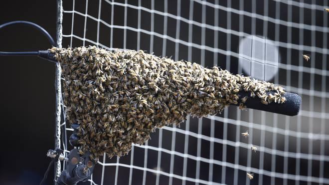 MLB: San Diego Padres gegen Miami Marlins wegen Bienenschwarm unterbrochen , Ein Bienenschwarm hat es sich im Spiel zwischen San Diego und Miami am Spielfeldrand gemütlich gemacht