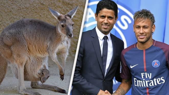 Ein böses Känguru-Video über PSG-Boss Nasser El-Khaleifi sorgte für mächtig Stunk