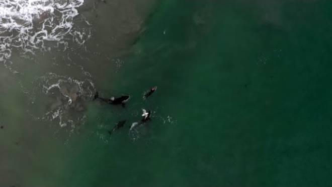 Schwimmtrainig mit Orcas