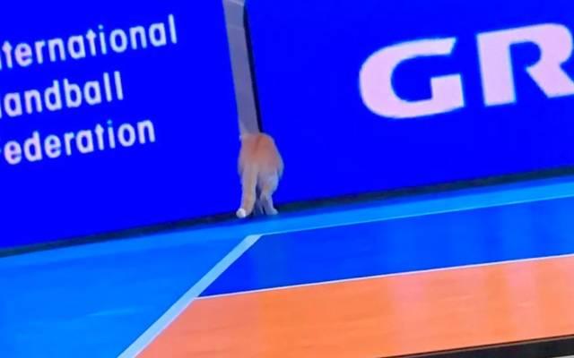 Erneut ist bei der Handball-WM in Ägypten eine Katze in den Blickpunkt geraten