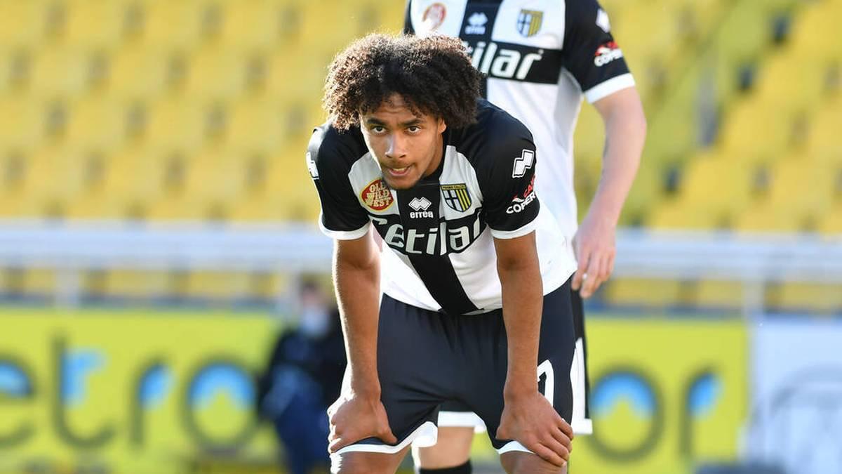 Zirkzee vor langer Pause - Parma sucht Absprache mit Bayern