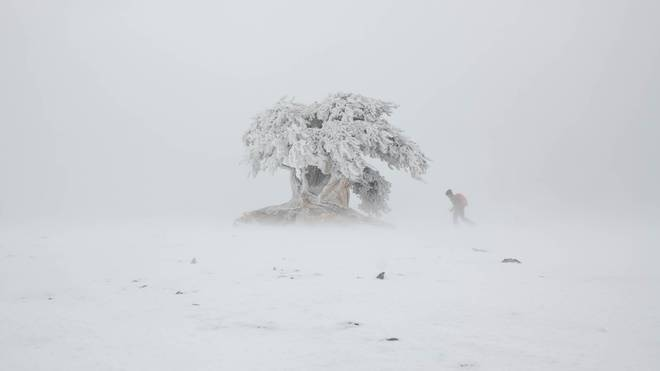 """Gewinnspiel: Tickets für die """"Tree Line"""" Weltpremiere (Innsbruck) – Patagonia"""