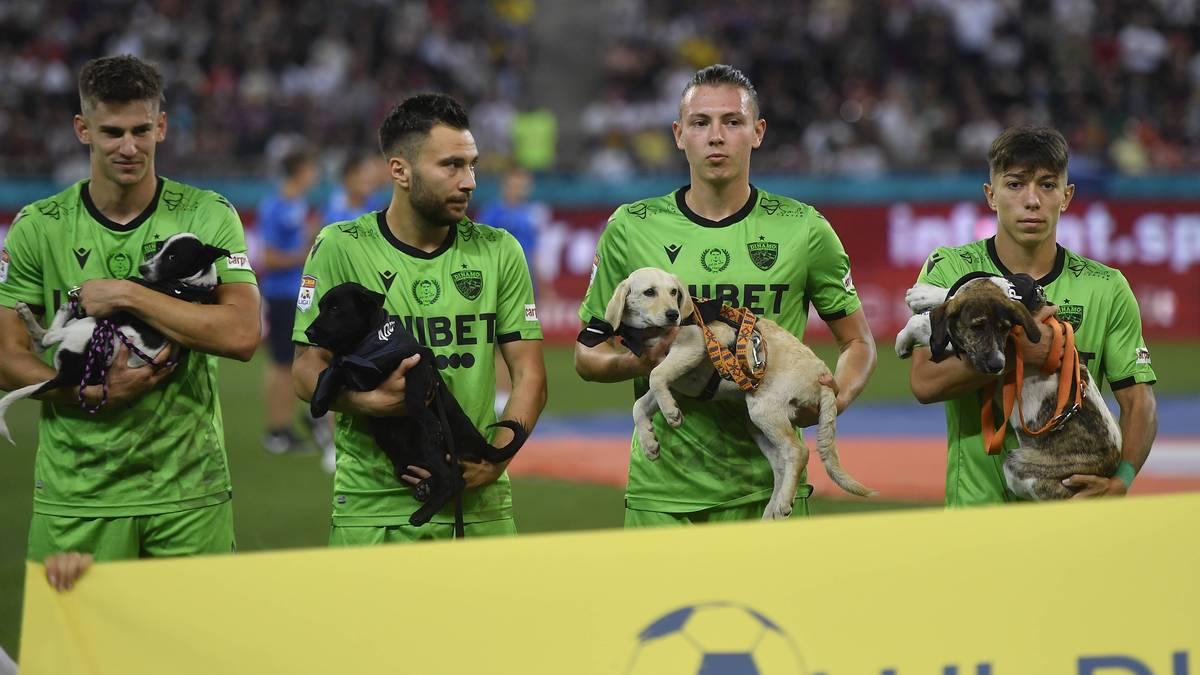 Die Fußballer laufen mit Hunden ins Stadion ein