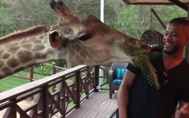 Patrice Evra ist ein echter Tierliebhaber