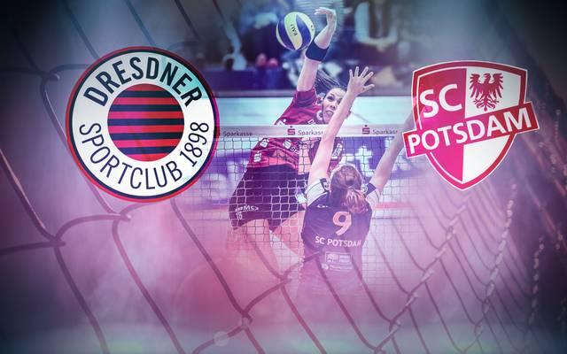 Der Dresdner SC empfängt den SC Potsdam zum Showdown um die Playoffs