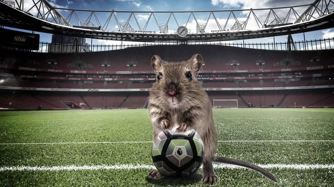 Das Emirates-Stadion des FC Arsenal ist von einer Mäuseplage befallen